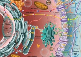 Eukaryotic cell anatomy and protein synthesis