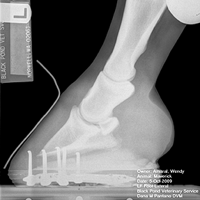 Lateral radiograph of hoof