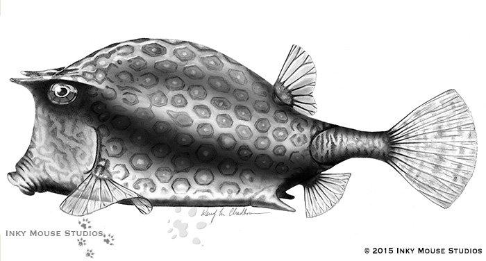 Boxfish carbondust illustration