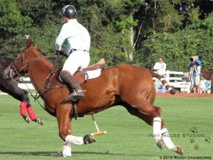 Cantering polo pony in a turn