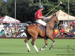 Suspension phase of canter stride
