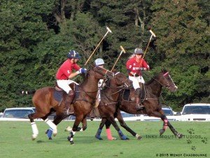 Three polo ponies all in different phases on canter